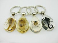 Wholesale Wholesale Fashion Spider Jewelry - FREE SHIPPING 12 pcs Fashion Jewelry Key Chains Clear Bottom Real Scorpion Crab Angle spider Cool Real Insect Keychain