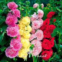 Wholesale flower seed mixes resale online - Hollyhock Double Flower Mix Color Seeds Bag Easy to Grow from Seeds Annual Cutflower