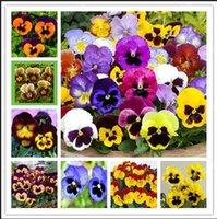 Wholesale Viola Tricolor Flower - Time-Limit!! 500 PCS Beautiful Pansy seeds Mix Color Wavy Viola Tricolor Flower Seed bonsai potted DIY home & garden