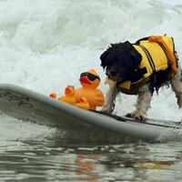 Wholesale Life Size Female - Dog Life Jacket Dog swimsuit Vest Outward Hound Pet Saver Dog Beach Bathing Suit S M size