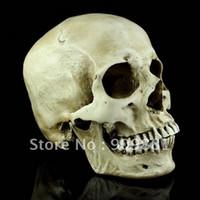Wholesale Model Stills - New Medical Skull Model High Simulation Skeleton Human Skull Model Human Still Life Painting Mask Free Shipping