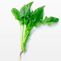 Wholesale Gardening Spinach - Organic 200 Pcs Spinach Vegetable Seeds Heirloom Garden Plant Bonsai Delicious