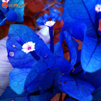 Wholesale bonsai seeds blue resale online - New Real Blooming Rare Blue Plants Bougainvillea Spectabilis Willd Bonsai Plant Seeds Particles