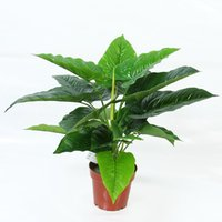 Cheap Artificial Plants Trees Indoor | Free Shipping Artificial ...