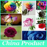 Wholesale Flower pots planters Rainbow rose seeds Beautiful rose seed Bonsai plants Seeds for home garden Rare Colored Roses seeds