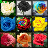 Wholesale Rare rose seeds home Garden Perennial plant flower seeds Indoor bonsai flowers tree plants garden supplie flowers