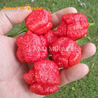ingrosso semi di peperoncino-Nuova varietà di semi di peperoncino piccante, 100 semi, Trinidad Scorpion Semi di pepe MORUGA * Il peperoncino più piccante del mondo *