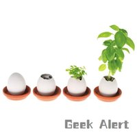 Expédition gratuite Plantation Potted Mini Green Lucky Egg DIY Potted Plants Cultivé Desktop Micro Paysage Bonsai Seed