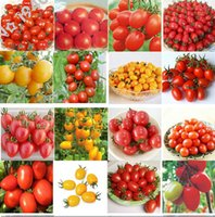 Wholesale Green Tomatoes Seed - 100pcs 24 KINDS Tomoto Seeds mixed packed Purple Black Red Yellow Green Cherry Peach Pear Tomato Seed Organic Food for Garden