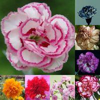 güzel bitkiler toptan satış-2016 Nakliye Enfant de Güzel 100 Karanfil Tohum Karıştırma Saksı Bitkileri Çiçek Tohumları Çiçek Tohumları Dört Mevsim Kolay Bitki Çok Yıllık HY1176