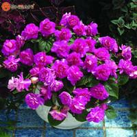 sementes de flores roxas venda por atacado-Atacado 20 Pcs Roxo Univalve Sementes de Gerânio Flor Perene Seeds planta bonsai