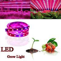 rote blaue hydroponische wachsende lichter großhandel-Vollspektrum SMD5050 LED wachsen Streifenlicht NICHT-wasserdichte LED wachsen Licht für Hydroponische Pflanzenanbaulampe wachsen Kasten Rot Blau 4: 1