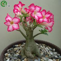 çiçekler çölü toptan satış-Daha renk Çöl gül tohumları Bonsai Balkon Çiçek Saksı Tohumları DIY Ev Bahçe 1 Parçacıklar / lot b018