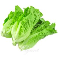 Wholesale Italian Seeds - Lettuce Italian Vegetable 500 Seeds Easy-growing Non-Gmo Heirloom Vegetable Seed Very Delicious