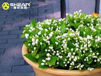 sementes de plantas de jasmim venda por atacado-30 pçs / saco Jasmim Branco Sementes de Jasmim Sementes de Flores Planta Perfumada Sementes de Jasmim Árabe Bonsai Vasos de Plantas para Casa Jardim