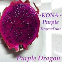 Wholesale Garden Dragons - 500pcs a set Purple Dragon Cactus Fruit Seed DwarfGiantFarm Home Garden Reasonable Choice Reasonable Price Retail And Wholesale