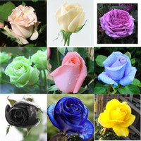 Wholesale Colourful Flowers - Free Shipping Colourful Rose Flower Seeds *100 Seeds Per Package*Cheap Balcony Potted Various Flowers Seed Garden Plants