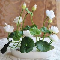 Wholesale Hydroponic Mini - Multicolor lotus seeds hydroponic plants aquatic flowers mini water lily garden decoration plant 10pcs F124