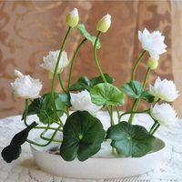semillas de loto acuaticas al por mayor-Semillas de loto multicolores plantas hidropónicas flores acuáticas mini lirio de agua decoración del jardín planta 10 unids F124