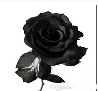 Wholesale New arrive rose flower seed seeds china rare black rose flower special flower seeds