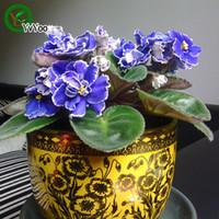 violette samen großhandel-Multi Farbe optional Violet Seeds Bonsai Balkon Blume Topf Samen DIY Hausgarten 50 Partikel / lot E022