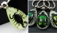 Wholesale Real Scorpion Keychain - FREE SHIPPING 12 pcs High Quality Real Insect Scorpion Beetle Resin Keychain,Promotion Gift,Novel Gift,Bug KeyChains,Glow In Dark