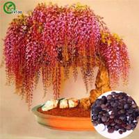 ingrosso bonsai potting mix-Bonsai fiore Semi di glicine Pianta in vaso Colore misto Semi di fiori da giardino O023