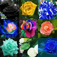 Wholesale Cheap Paper Decorations - 2016 Cheap Wedding Rose Seeds Popular Yellow Garden Seeds 100 Piece Per Package Free Shipping Home Decoration