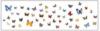 Wholesale Diy Stiker - Hot sale 81 butterfly Wall Sticker Creative Floral Stickers Decorative Mural Child Rooms Stiker DIY Wall Decals AY1043A
