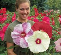 rosas de quintal venda por atacado-50 Rose mallow Sementes de Flores Hardy, Misture A Cor, DIY Início Jardim em vaso ou quintal flor planta F058