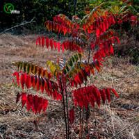 ingrosso piante del cortile-Torcia Albero Semi Albero in vaso Bonsai Cortile Casa Giardino Pianta bonsai 30 pezzi J01