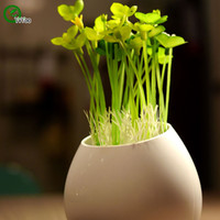 Wholesale Clover Garden - Particles Clover Seeds Flower Pot Planters Garden Bonsai Grass Seed 100 Particles   lot W019