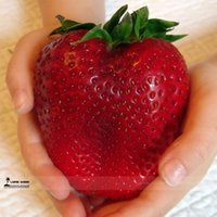 Wholesale Sweet Packing - Rarest Heirloom Super Giant Japan Red Strawberry Organic Seeds, Professional Pack, 100 Seeds   Pack, Sweet Juicy Fruit