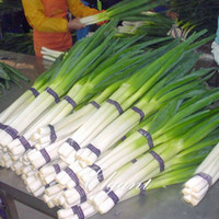 Wholesale Grow Vegetable Seeds - Onion Giant Chinese Vegetable 200 Seeds Popular Cooking Onions Variety Easy-growing Non-Gmo Heirloom Vegetable Seed High Yield