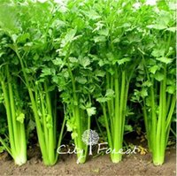 Wholesale Celery Seeds - Celery Chinese Small Fragrant Vegetable Seeds 500 Pcs   Bag Crispy Easy to Grow Heirloom Vegetable Seed Container Balcony