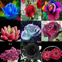 Wholesale Earth Charms - Free Shipping Mint Colorful Rose Seeds 100 Pieces Seeds Per Package New Arrival Ombre Charming Garden Plants