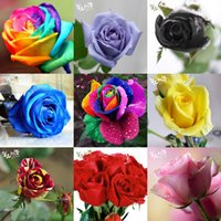 Wholesale Rose Garden Colors - Hot Sale 10 Colors Rose Seeds *100 Pieces Seeds Per Package* Flower Seeds For Home Garden Plants