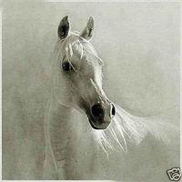 ölfarbe leinwand weißes pferd großhandel-White Horse, echtes handgemaltes klassisches Kunst-Ölgemälde auf dicker Leinwand Museumsqualität in Mehrgrößenauswahl