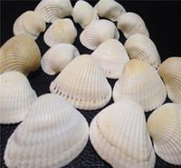 Wholesale Beach Shells Crafts - White Shell 100 TINY MIXED SEASHELLS Small Sea Shells Craft Wedding Beach Confetti Mediterranean White Sea Shell Natural Conch Shells