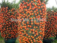 Wholesale Fruit Tree Flowers - 30 Pieces  Bag Top Selling High Quality Bonsai Sweet Orange Tree Seeds Organic Fruit Tree Seeds Free Shipping For Home Garden 3bags per lot