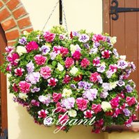 Wholesale Petunia Seeds - Petunia Double Flower 100 Seeds Mixed Color Ideal Garden Flower for Flower Beds Baskets Containers Bonsai