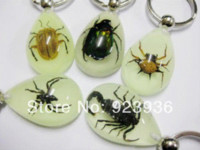 Wholesale Real Scorpion Keychain - FREE SHIPPING 15 PCS fashion cool real scorpion spider beetle glow drop keychain Key Chains Cheap Key Chains