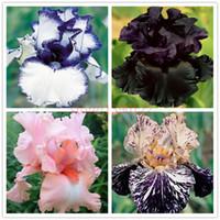 Wholesale Garden Irises - 50pcs rare iris ,iris seeds,bonsai flower seeds,24 colours, Heirloom Iris Tectorum Perennial Flower Seeds, plant for home garden