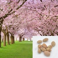 jardim japonês bonsai venda por atacado-Venda quente 10 pcs japonês sementes de sakura oriental sementes de flores de cerejeira Bonsai plantas para casa jardim