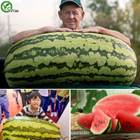 Wholesale Giant Fruit Seeds - Giant watermelon Seeds Delicious Fruit Mini Potted Fruit Tree Seeds Interesting Bonsai Plant 30 Particle F011