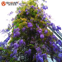 Common ornamental flowering trees - 10 Particles Bag Bonsai Plant Blue Wisteria Tree Seeds Indoor Ornamental Plants Seeds Wisteria Flower Seeds