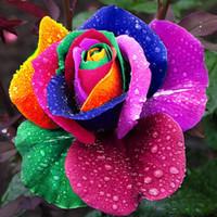 colorful rose seeds toptan satış-150 Adet Tohumları Nadir Hollanda Gökkuşağı Gül Çiçek Ev Bahçe Nadir Çiçek Tohumları Renkli Gül Tohumları