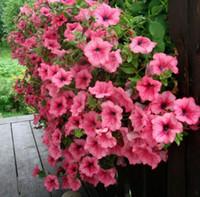 semillas de variedad al por mayor-Petunia Seeds Shock Wave Mix 200 Semillas peletizadas NUEVA VARIEDAD planta de decoración de jardín L48