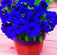 Wholesale Glory Flower - 100pc lot free shipping Morning glory seeds petulantly seeds balcony bonsai flower petunia set