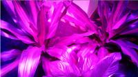 wachsen lichter uk großhandel-LED Grow Light 200W UFO LED Pflanze Grow Light LED Leuchtdiode Schwarz / Weiß Helligkeit mit EU / US / UK Stecker